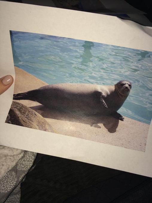 seal real